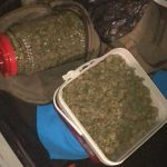 Четыре продавца марихуаны и экстази задержаны в Кишинёве: полиция конфисковала запрещённые средства на 100 000 леев (ВИДЕО)