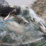 Более 90 рыболовных сетей за одну ночь: инспекторы по охране окружающей среды провели масштабный рейд