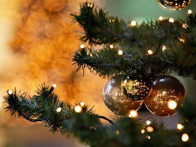 В столице появились в продаже первые новогодние ели (ВИДЕО)