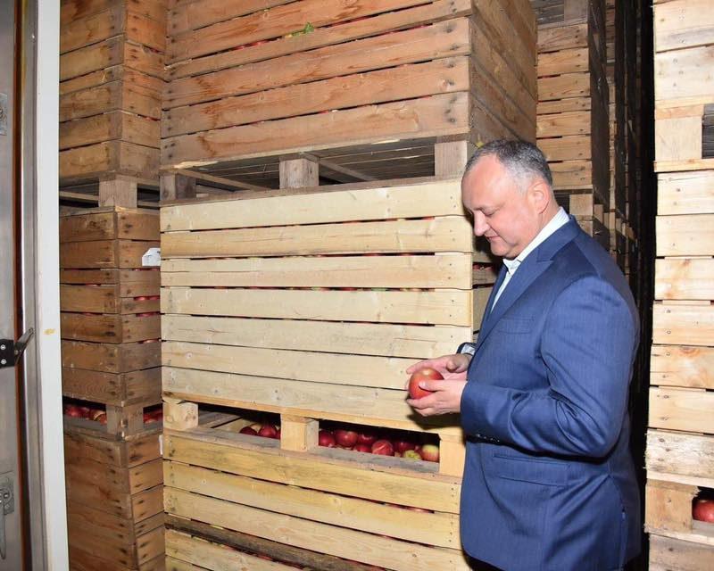Договоренности Додона и Путина в действии: в Россию доставлены первые партии молдавских яблок без пошлин (ВИДЕО)