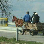 Безопасность движения: памятка для владельцев гужевого транспорта