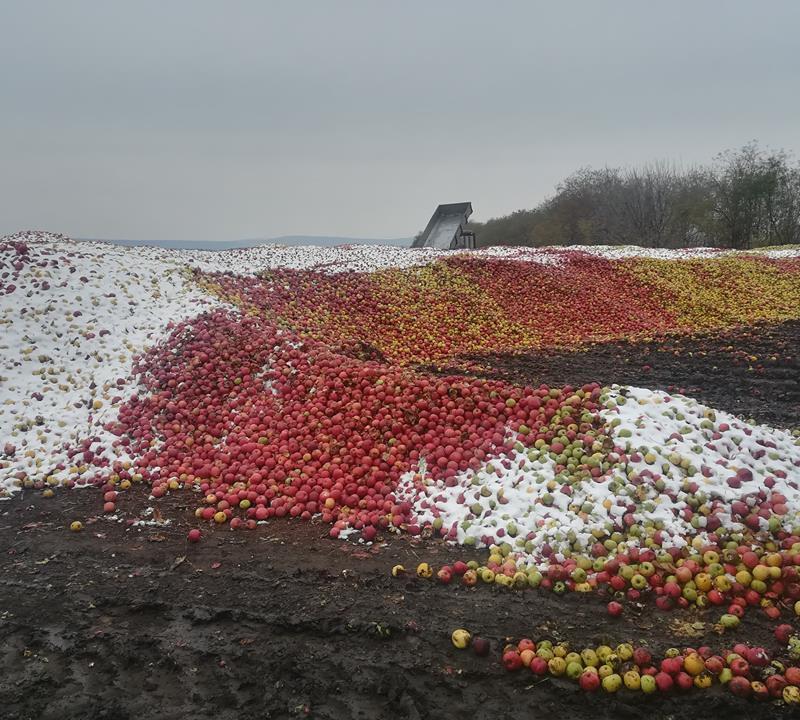Яблокам негде упасть