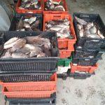 Полиция конфисковала полтонны свежей рыбы, нелегально завезённой из Тирасполя (ФОТО)