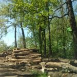 Наломал дров — получил штраф: бельчанина наказали за незаконную вырубку деревьев