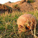 Два черепа и кости обнаружили при проведении земельных работ в Тирасполе