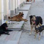 По инициативе ПСРМ в Кишиневе принят новый Регламент по бездомным и домашним животным