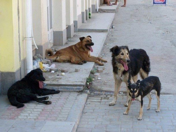 По инициативе социалистов в Кишиневе был принят регламент по бездомным животным