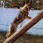 Собака помогла пограничникам поймать сигаретного контрабандиста (ФОТО)