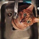 Некоторые жители столицы останутся в пятницу без воды