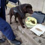 В Бричанах задержали банду, занимавшуюся изготовлением наркотиков (ФОТО, ВИДЕО)
