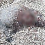 Незаконная охота в научном заповеднике обернулась для двух жителей Кагула уголовным делом