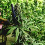 Обыски в Гагаузии: большое количество наркотиков обнаружено и изъято
