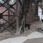 Стая бродячих собак напала на жительницу Кишинёва и искусала ей ноги (ФОТО)