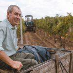 Урожай-2018: Молдова поставила виноградный рекорд