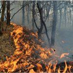 Власти намерены усилить меры по защите лесов от пожаров