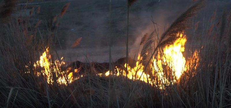 В Молдове продолжает гореть сухая растительность (ФОТО)