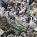 Жительница столицы превратила свой двор в свалку: по какой причине она коллекционирует тонны отходов