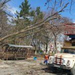 Северный ветер: в Бельцах упавшее дерево оборвало провода высокого напряжения (ФОТО, ВИДЕО)