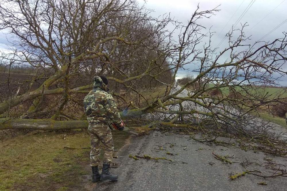 Поваленные деревья и рекламные щиты: последствия шквалистого ветра в Приднестровье (ФОТО)