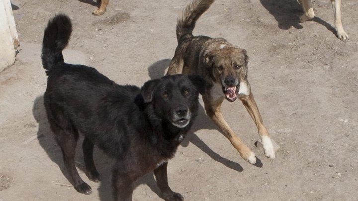 Стая бродячих собак держит в страхе жителей Рышкановки
