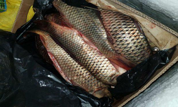 Под завязку: на румынской границе задержали молдаванку с полным багажником рыбы