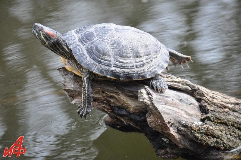 Молдова – родина черепах…