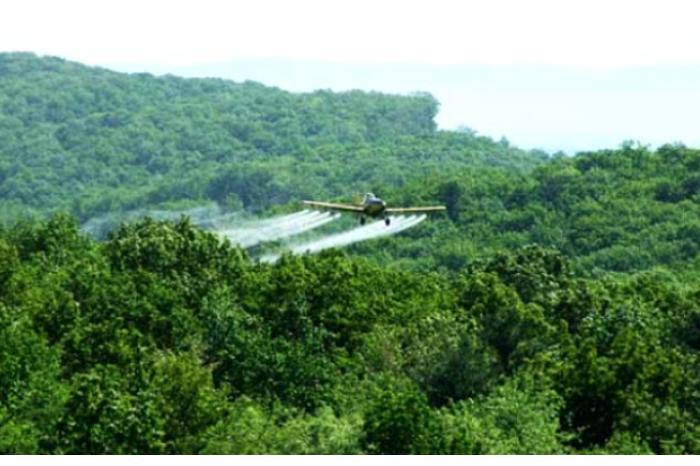 В Молдове проведут воздушную обработку лесного фонда против вредителей