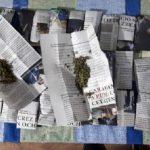 На севере страны по подозрению в выращивании и распространении марихуаны задержаны трое мужчин (ФОТО, ВИДЕО)