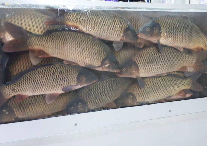 Сотрудники НАБПП предупредили граждан об опасности покупки свежей рыбы «с рук» (ФОТО)