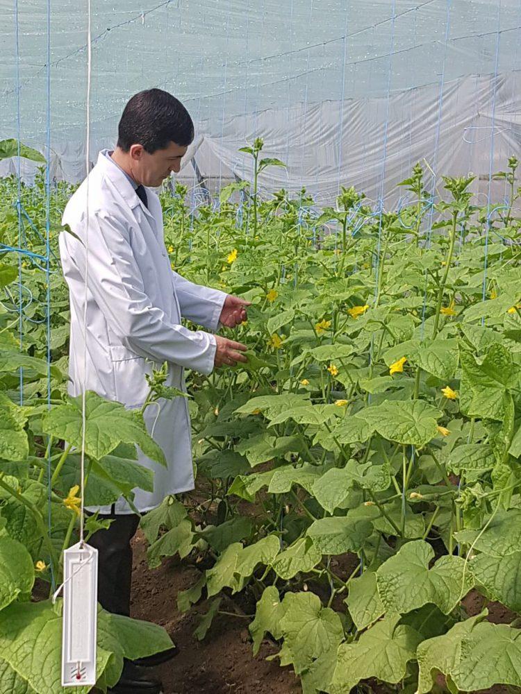 Специалисты проверят продаваемые в Молдове огурцы на наличие пестицидов