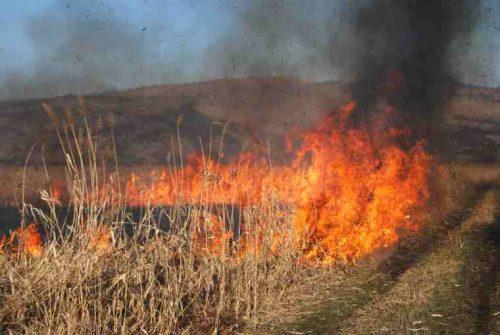 В Яловенском районе огонь уничтожил 30 гектаров растительности
