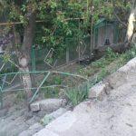 ДТП в Бельцах: легковушка протаранила дерево (ФОТО)