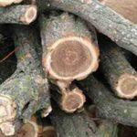 Сами себе лесорубы: правоохранители поймали трёх приднестровцев, незаконно спиливших деревья