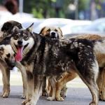 Порядка 1000 бездомных собак пройдут процедуру стерилизации
