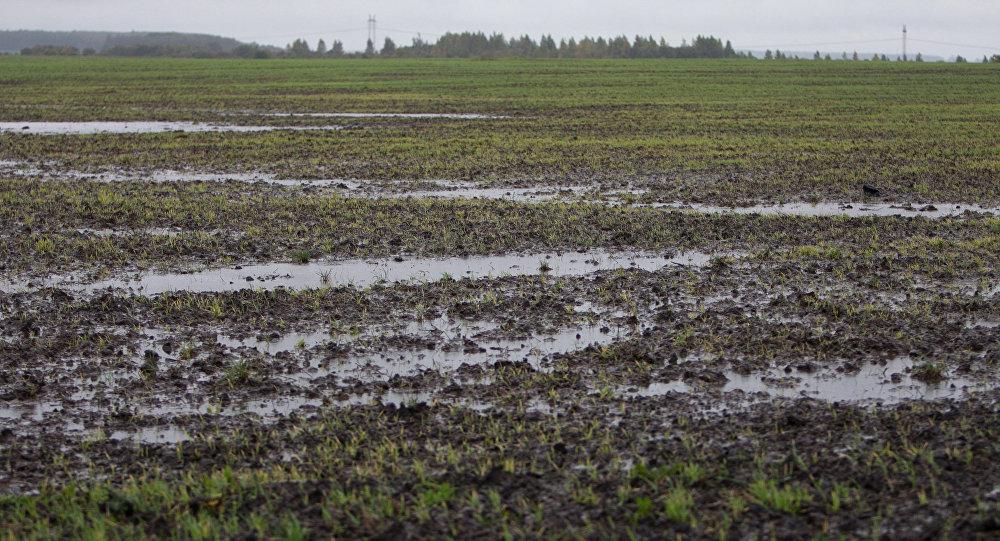 Во Флорештах от ливней с градом пострадало более 2 000 га сельхозугодий