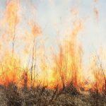 С начала года в Гагаузии случилось вдвое меньше пожаров, чем годом ранее