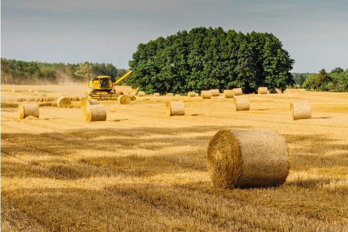 Эксперты прогнозируют, что в этом году в Молдове будет хороший урожай