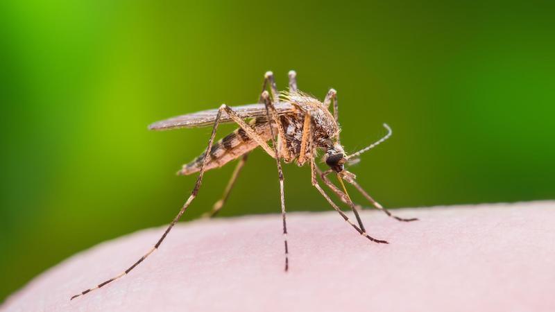 Вниманию туристов! Власти Греции предупредили о распространении вируса лихорадки Западного Нила