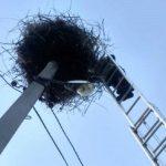 В Криулянах спасатели вернули в гнездо упавшего аистёнка (ФОТО)