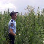 В Приднестровье продолжаются профилактические мероприятия по борьбе с незаконным оборотом наркотиков (ФОТО)