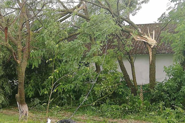 Разгул стихии: в Чадыр-Лунге деревья попадали на припаркованные авто (ВИДЕО)