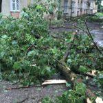 Бельчанин, на которого упало дерево, оказался в больнице