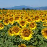Министерство экономики озабочено погодными условиями: они могут навредить сельскому хозяйству
