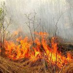 """Синоптики предупреждают о """"жёлтом коде"""" пожарной опасности"""