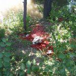 Ни себе, ни другим: неизвестные выбросили десятки килограммов слив у берега реки Бык (ФОТО)