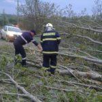 Деревья падали десятками: страшные последствия вчерашней стихии на севере страны