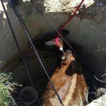 В Каушанах спасатели помогли вытащить из ямы корову