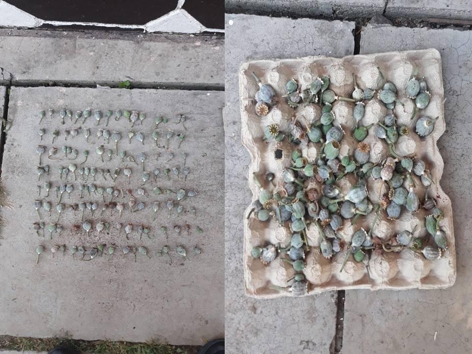 В доме жителя Новых Анен нашли 135 цветков мака (ФОТО, ВИДЕО)