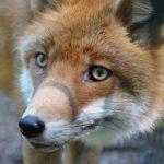 С начала года выявлено 23 случая бешенства у животных