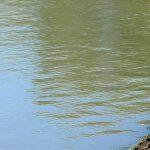 Житель Григориополя утонул в реке после распития спиртного